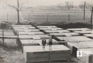 Bronowickie dzieci przy Młynówce Królewskiej na zbiornikach rybnych